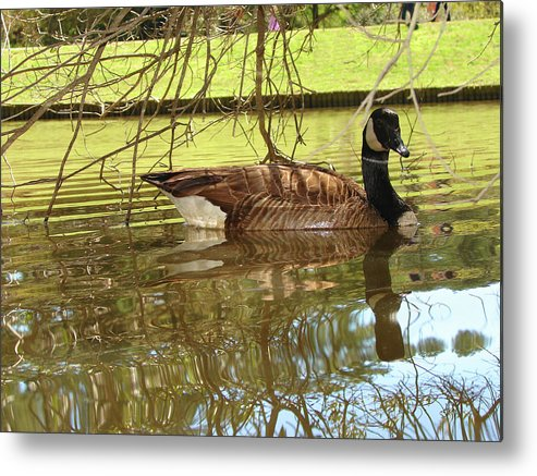 Goose Metal Print featuring the photograph Mother Goose by Laura Brightwood