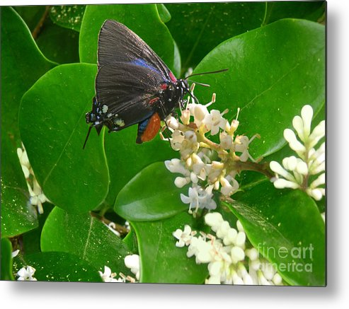 Nature Metal Print featuring the photograph Nature In The Wild - Beautiful In Black by Lucyna A M Green