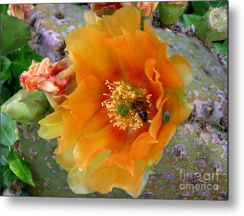 Nature Metal Print featuring the photograph Nature In The Wild - Cactus Honey by Lucyna A M Green