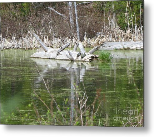 Turtle Metal Print featuring the photograph On The Pond by Juli House