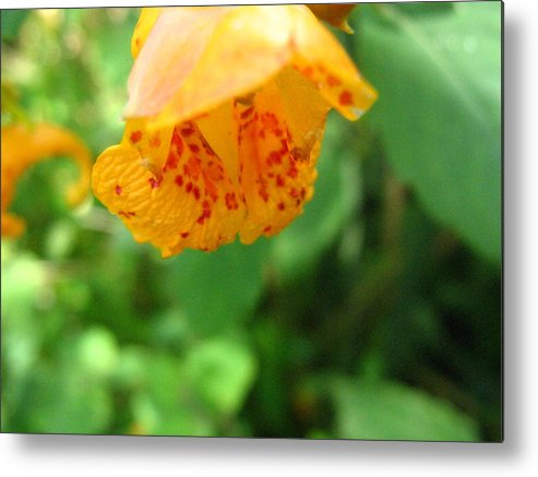 Flower Metal Print featuring the photograph Orange Flower by Melissa Parks