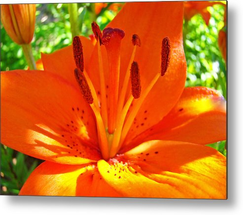 Lilies Metal Print featuring the photograph Orange Lily Flower Art Print Summer Lily Garden Baslee Troutman by Baslee Troutman
