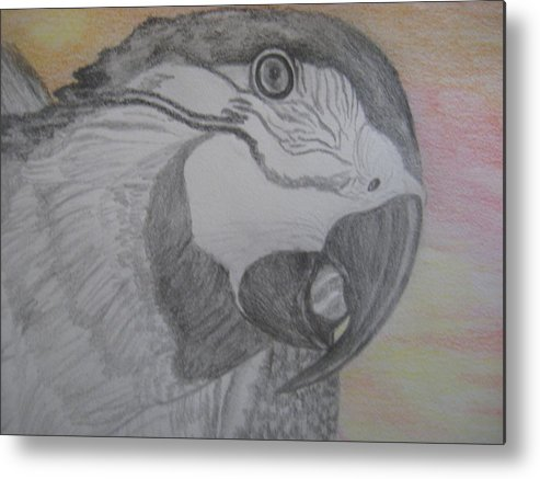Parrot Metal Print featuring the drawing Parrot by Theodora Dimitrijevic