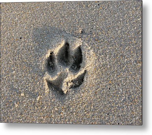 Dog Metal Print featuring the photograph Pawprint In The Sand by Stacey May