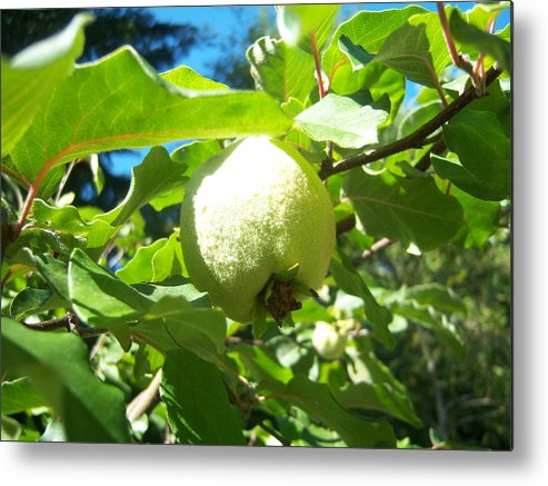 Pear Metal Print featuring the photograph Pear by Ken Day