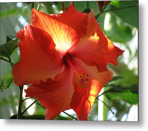 Orange Metal Print featuring the photograph Perfectly Poised by Karen Briggs