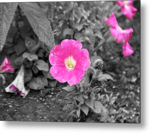 Flowers Metal Print featuring the photograph Pink by Jessica Burgett