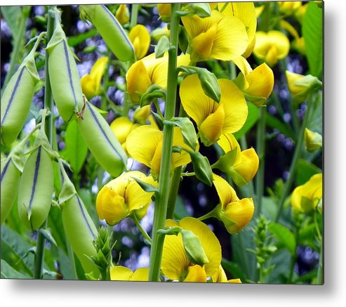Wildflowers Metal Print featuring the photograph Pods And Blooms by Mike Farmer