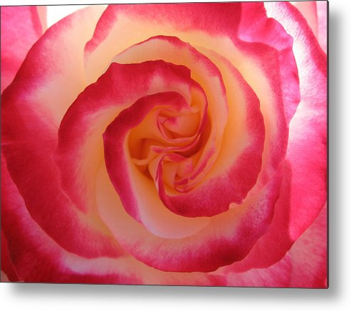 Rose Metal Print featuring the photograph Strawberry Swirl by Kathy Roncarati