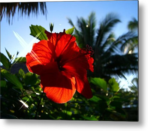 Flowers Flowers Flowers Metal Print featuring the photograph Sun And Flowers by Jonathan Galente