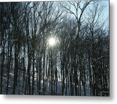 Sun Metal Print featuring the photograph Sun Through The Trees by Martie DAndrea