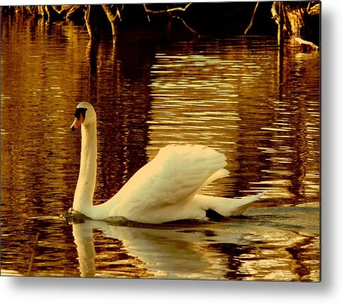 Swan Metal Print featuring the photograph Swan Dance by Kendall Eutemey