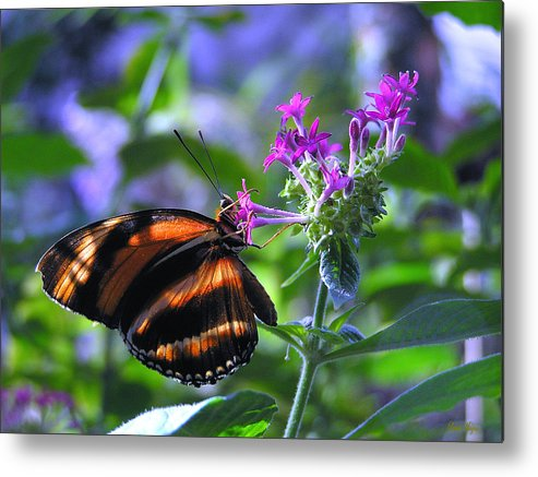 Butterfly Metal Print featuring the photograph Sweet Nector by Louise Magno