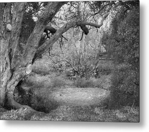 Landscape Metal Print featuring the photograph Sycamore Grove Black And White by Karen W Meyer