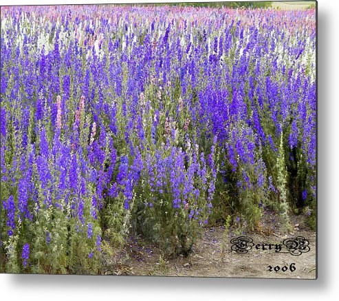 Landscape Metal Print featuring the photograph Texas Wildseed Farm by Terry Burgess