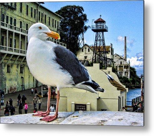 Alcatraz Metal Print featuring the photograph The Bird Of Alcatraz by Nigel Fletcher-Jones