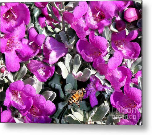 Nature Metal Print featuring the photograph The Flight Of The Bumble Bee by Lucyna A M Green