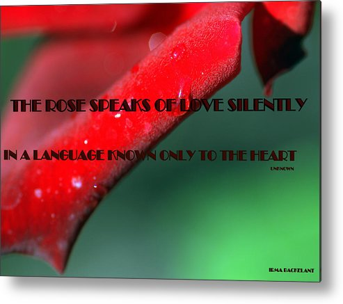 Poster Metal Print featuring the photograph The Rose Speaks Of Love by Irma BACKELANT GALLERIES