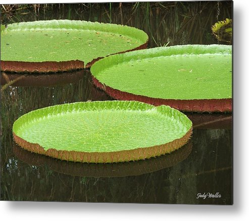 Water Metal Print featuring the photograph There Are Three by Judy Waller
