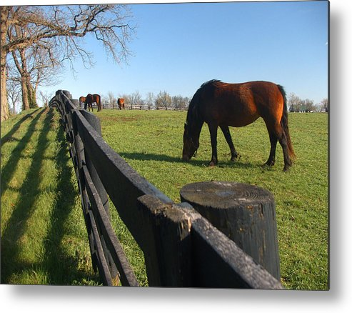 Horse Metal Print featuring the photograph Thoroughbred Horses In Kentucky Pasture by Dave Chafin
