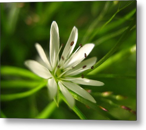 Tiny White Flower Metal Print featuring the photograph Tiny White Flower by Melissa Parks