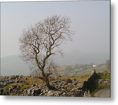 Tree Metal Print featuring the photograph Tree At Cowside by Steve Watson