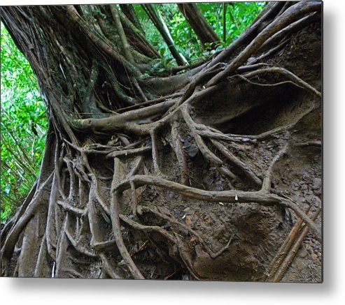Hawaii Metal Print featuring the photograph Tree From Manoa Falls by Elizabeth Hoskinson