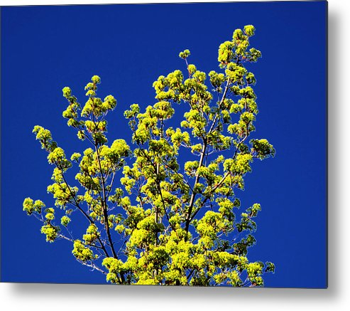 Spring Metal Print featuring the photograph Tree Next Door Ae 3 by Lyle Crump