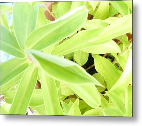 Plants Tropical Metal Print featuring the photograph Tropical 1 by Robert aka Bobby Ray Howle