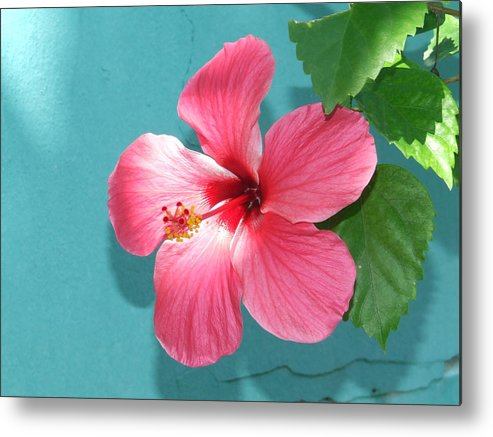 Flower Metal Print featuring the photograph Tropical Bloom by Vanda Sucheston Hughes