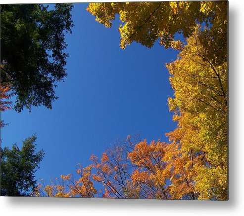 Trees Metal Print featuring the photograph What A Day - Photograph by Jackie Mueller-Jones
