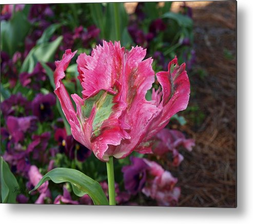 Blooming Metal Print featuring the photograph Wow by Judy Waller