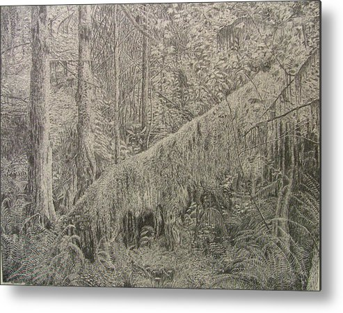 Rain Forest Metal Print featuring the drawing Rain Forest by Dan Hausel