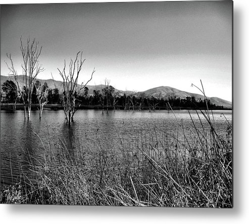 Otay Lake Metal Print featuring the photograph Standing Still by Cindy Panyanouvong