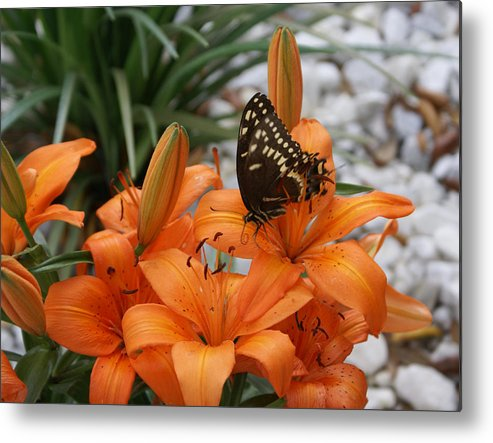 Easter Lilly Metal Print featuring the painting The Descent by Debbie May