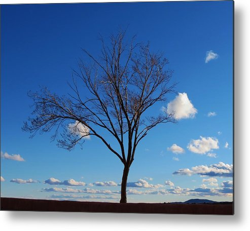 Tree Metal Print featuring the photograph Waiting For Spring by Feva Fotos