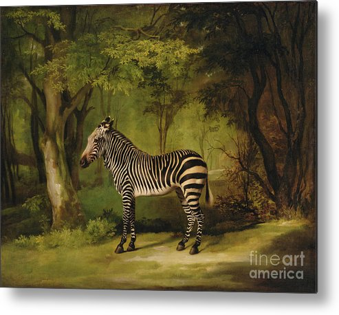 Zebra Metal Print featuring the painting A Zebra by George Stubbs