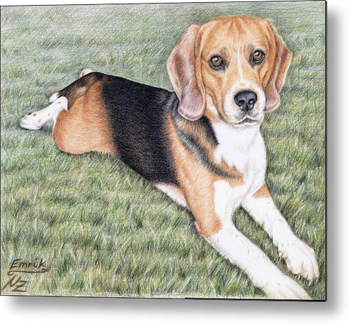 Dog Metal Print featuring the drawing Beagle by Nicole Zeug