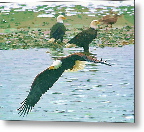Eagles Metal Print featuring the photograph Eagle Over The River by Clarence Alford