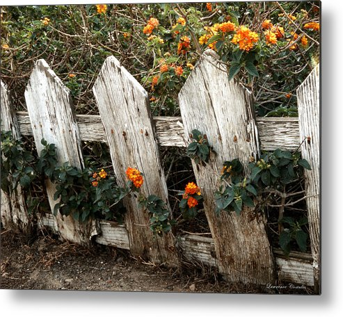 Flowers Metal Print featuring the photograph Elsinore Fence by Lawrence Costales