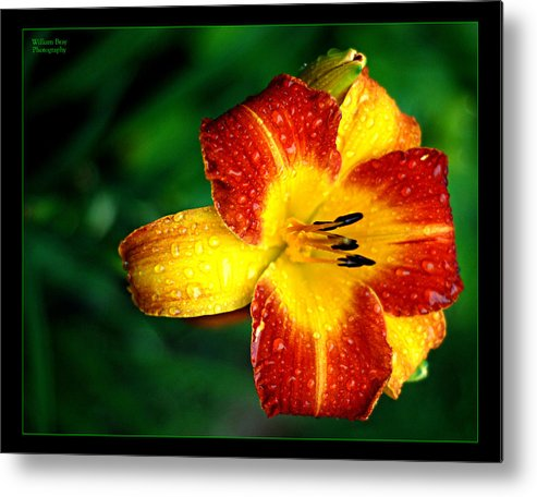 Floral Metal Print featuring the photograph Morning Dew by William Bray