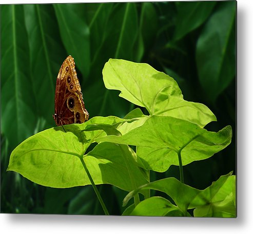 Light Metal Print featuring the photograph Morning Light by Gae Helton