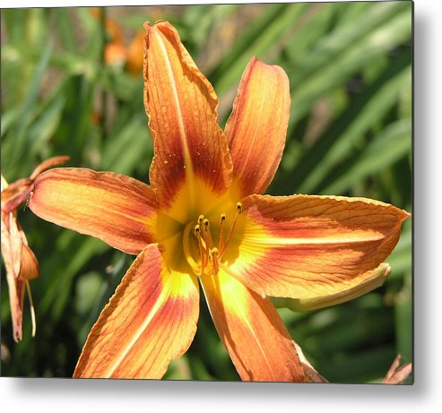 Flowers Metal Print featuring the photograph A Flower At The Farm by Janis Beauchamp