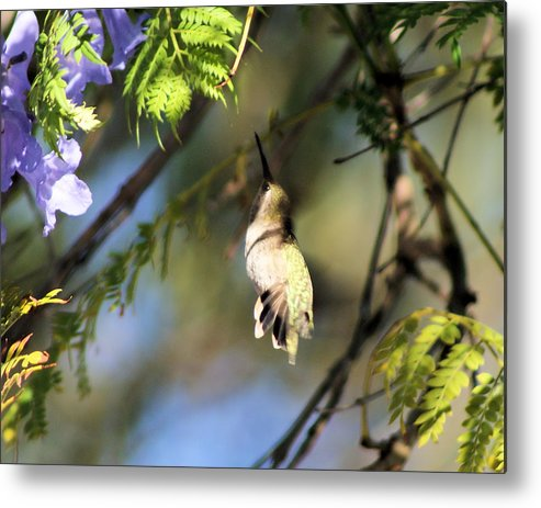 Hummingbird Metal Print featuring the photograph All The Way Up There by Ellen Lerner ODonnell