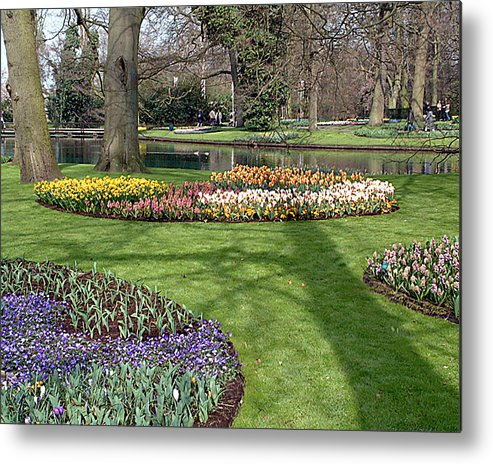 Keukenhof Gardens. Lisse Metal Print featuring the photograph Dutch Tulip Gardens by Charles Ridgway