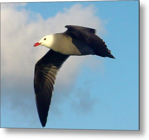 Seagull Metal Print featuring the photograph Free Flight by PJ Cloud