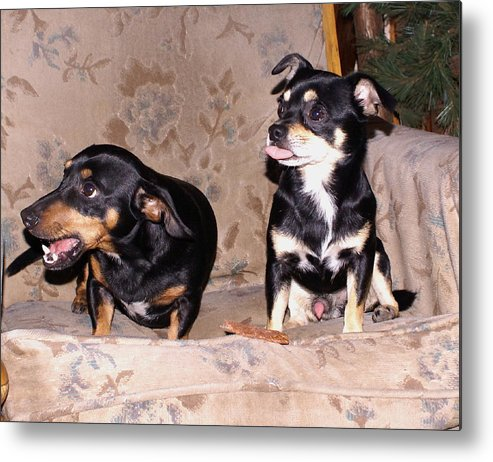 Dogs Metal Print featuring the photograph He's All Mine by Debbie May