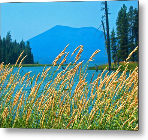Nature Metal Print featuring the photograph Mt. Bachelor by Dorota Nowak