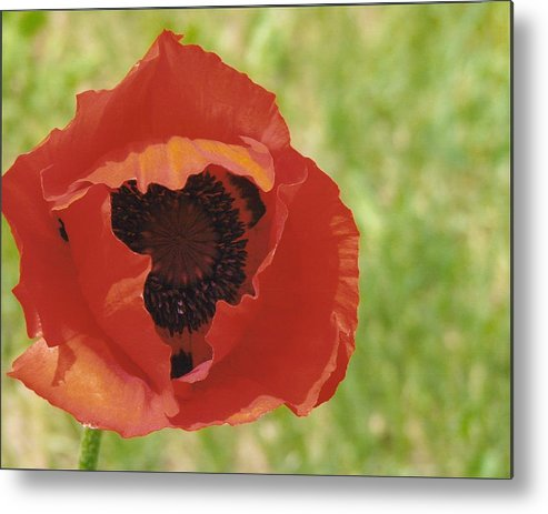 Flower Metal Print featuring the photograph Poppy by Yolanda Lange