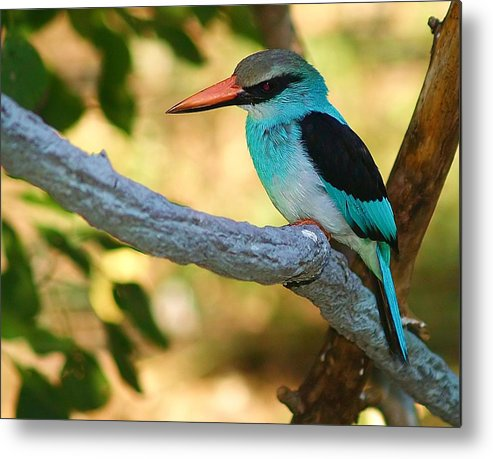 Kingfisher Metal Print featuring the photograph Pretty Bird by Gaby Swanson
